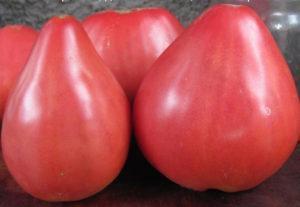 Описание и характеристики томата сорта Батяня, урожайность и выращивание