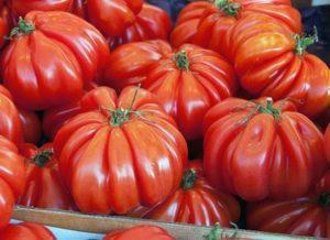 Описание и характеристики сорта томатов Пузата хата, урожайность и выращивание
