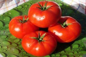 Описание и характеристики томатов сорта Взрыв, урожайность и выращивание
