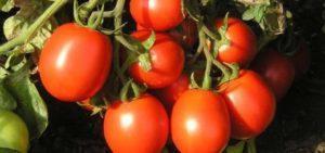 Описание и характеристики сортов китайских помидоров, урожайность и выращивание