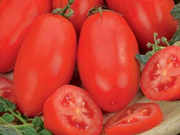 Челнок томат