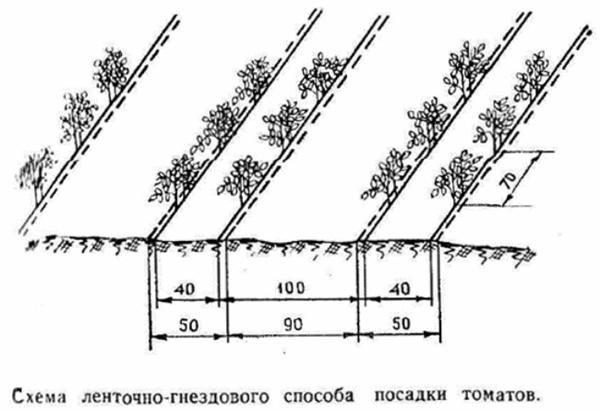 ленточно-гнездовой способ посадки томата