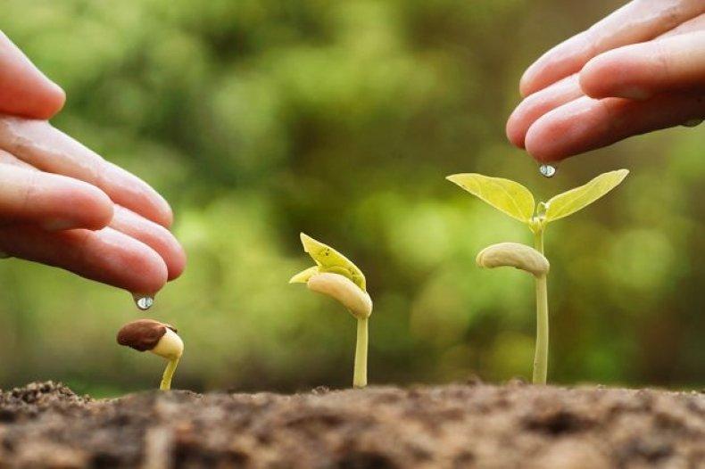 Регулятор роста «Коренастый»