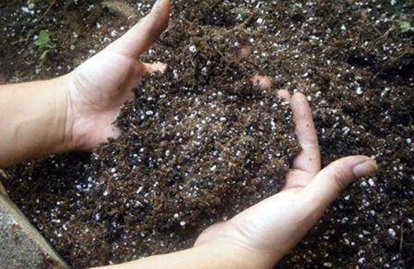 Земля удобренная фосфором для посадки томата