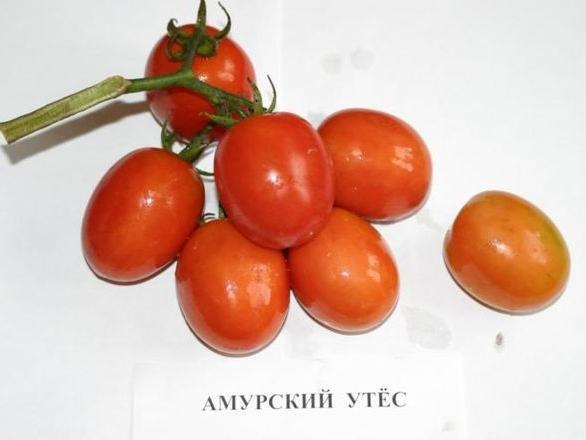 томат Амурский утес