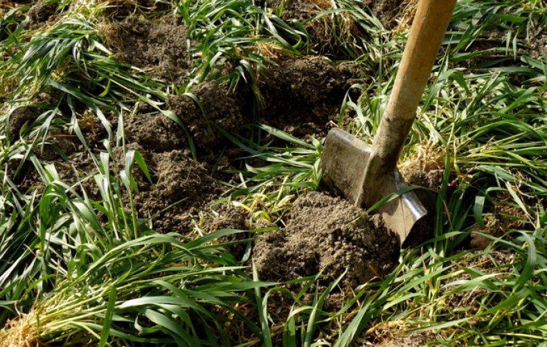 перекоп травы