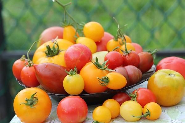 желтый и красный томат