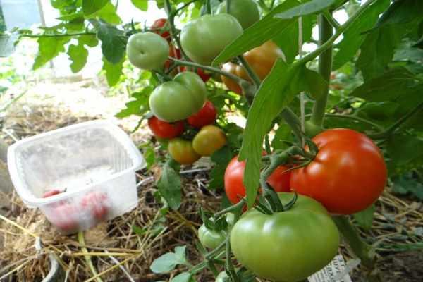 Неподходящий грунт для томатов
