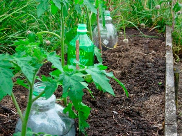 высадка рассады в открытым грунт