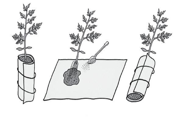 метод выращивания томатов