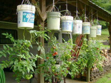 выращивания помидоров
