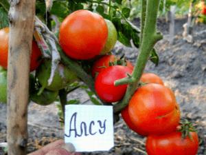 Описание лучших сортов помидоров без пасынкования для теплиц