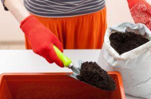 Какой состав грунта лучше для рассады помидоров и как сделать почвосмесь своими руками