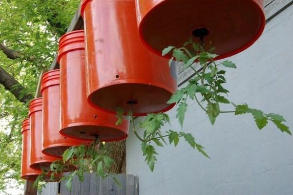 выращивание томатов верх ногами