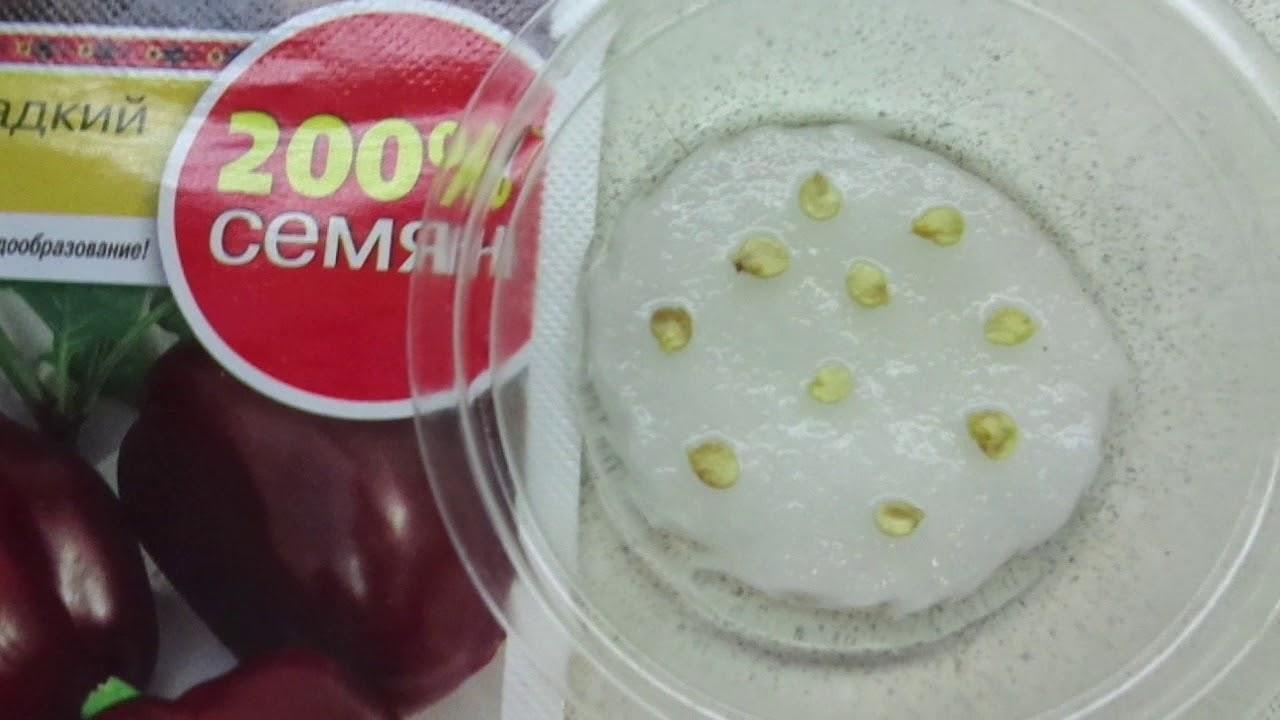 как проверить всхожесть семян помидоров