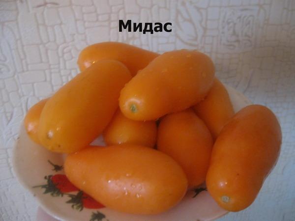 томат мидас
