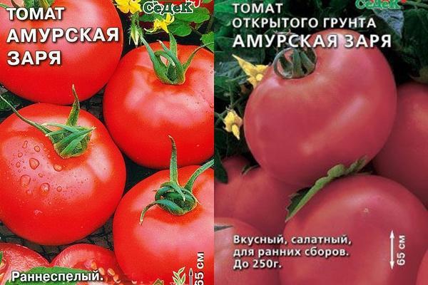 томат Амурская заря