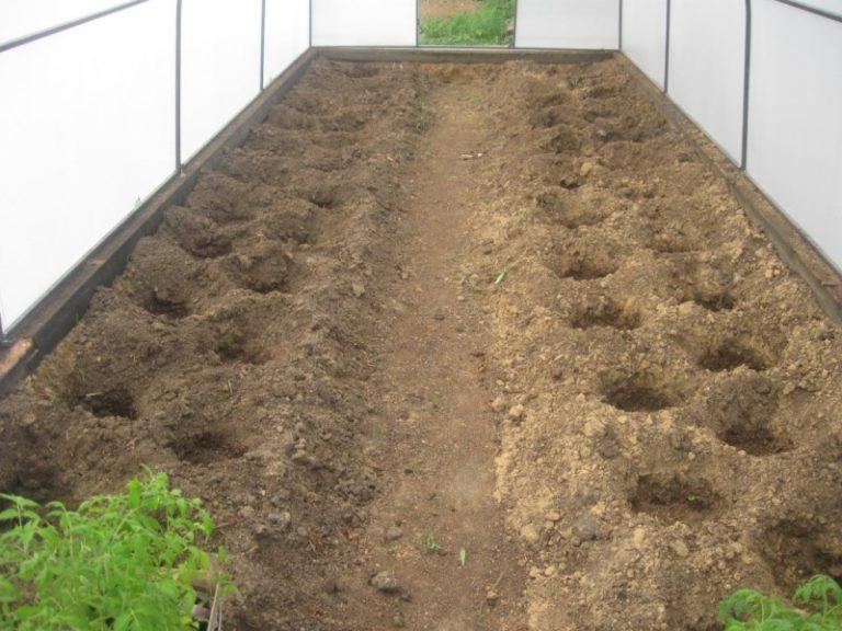 почва в теплице