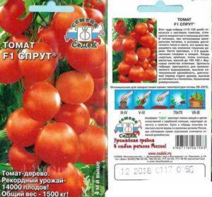 Характеристика и описание томата сорта Спрут, урожайность и выращивание