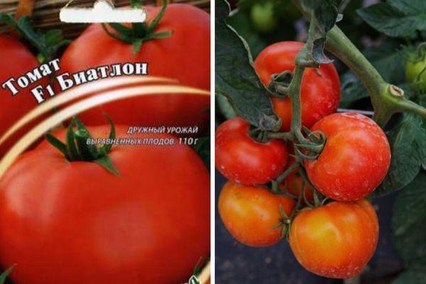 томат Биатлон