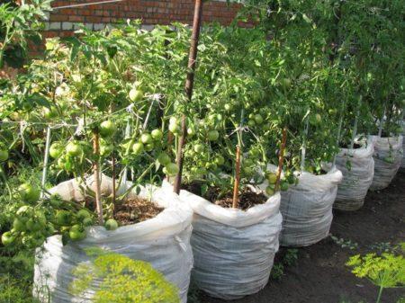 томаты в мешках