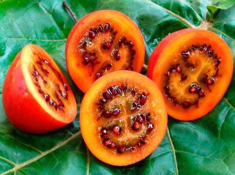 томат тамарилло
