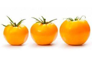 Желтые сорта помидоров с описанием и характеристиками для теплиц и открытого грунта