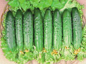 Описание и характеристики сорта огурцов Зозуля, выращивание и уход