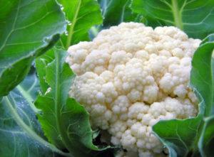 Чем подкормить цветную капусту в открытом грунте для роста и как правильно