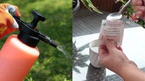 Применение борной кислоты для опрыскивания и обработки перцев