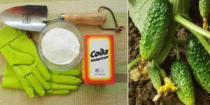 Применение соды для огурцов в огороде или саду, опрыскивание и подкормка