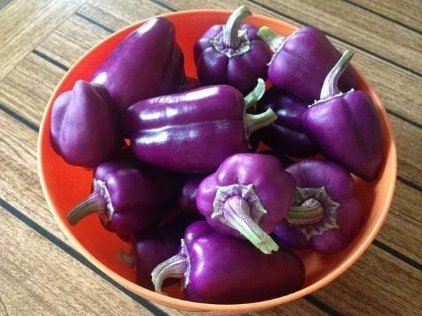 фиолетовый перец Арап
