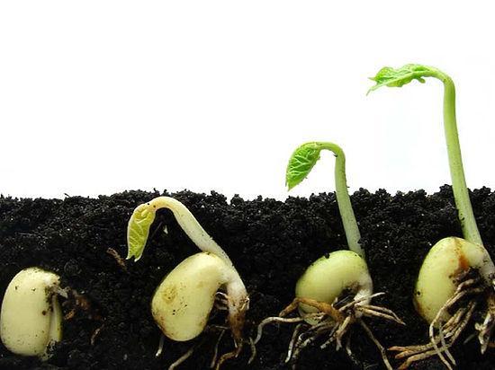 всход семян