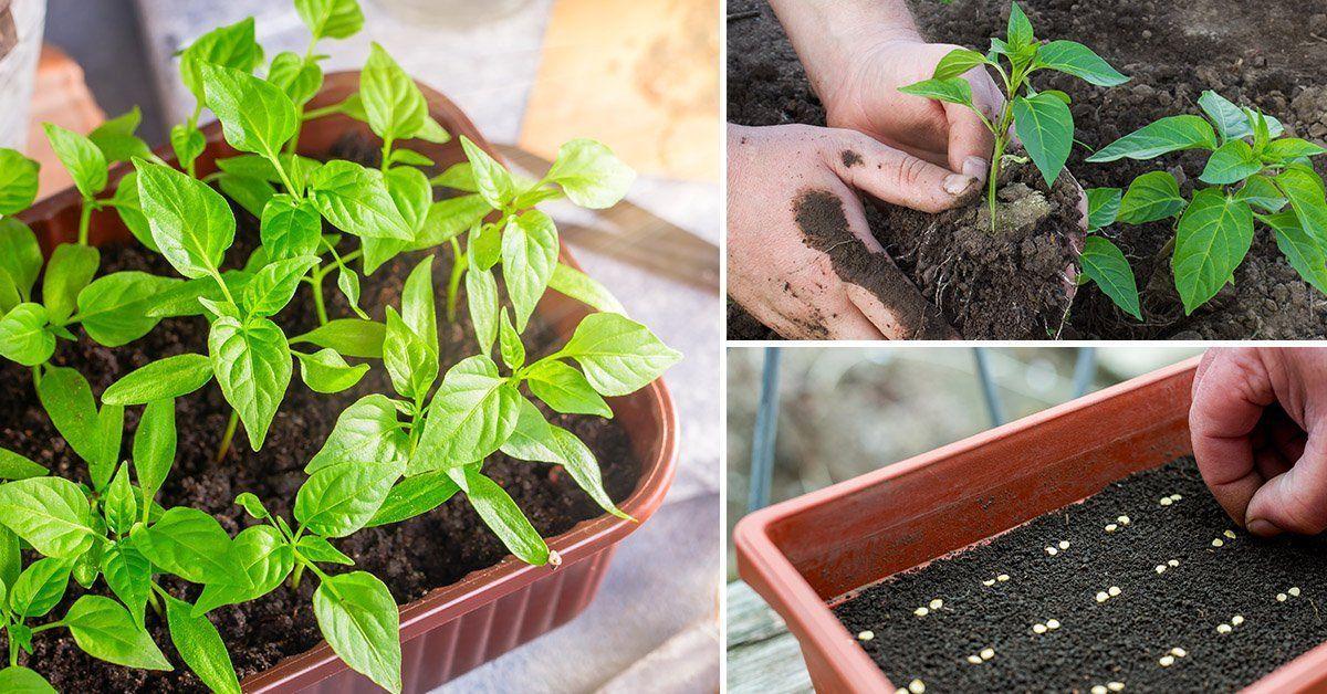 Дизайн огорода фото с посадками овощей загрузить начинает