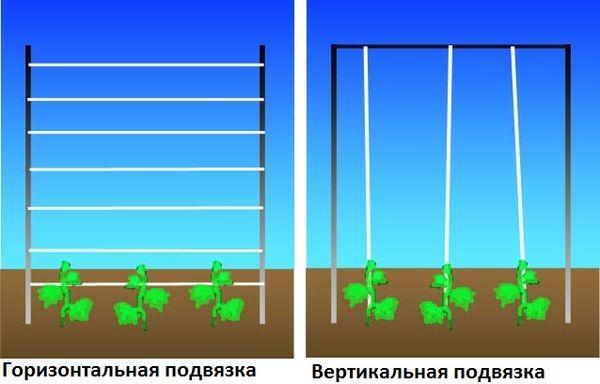 Методы подвязки
