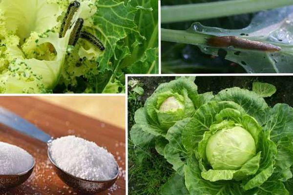 сода для капусты