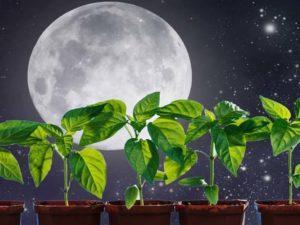 Благоприятные и неблагоприятные дни посевных работ по лунному календарю садовода и огородника на 2019 год