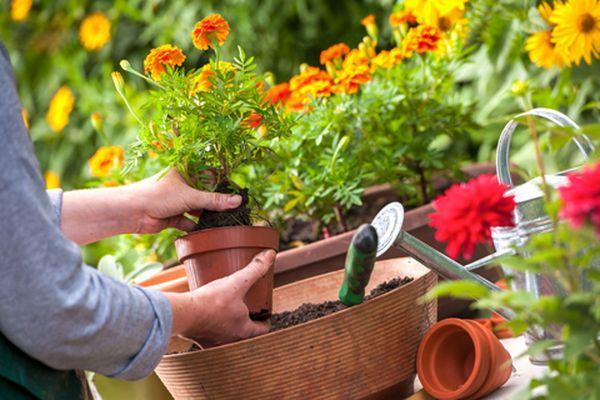 Посадка цветов