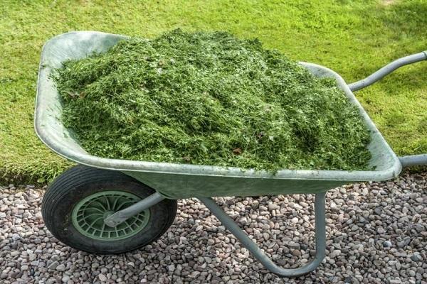скошеная трава