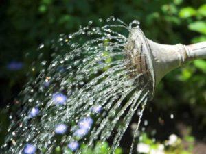 Как нужно поливать огурцы в теплице и открытом грунте, сроки и нормы расхода воды