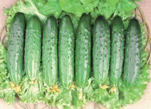 Описание и характеристики сорта огурцов Апрельский, выращивание и уход