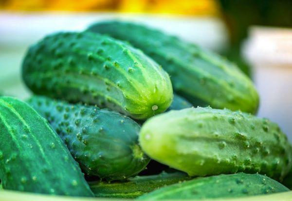 Свежие зеленцы