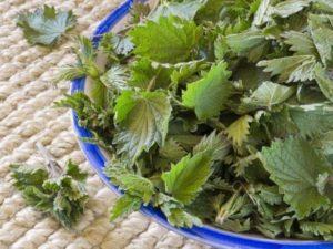 Можно ли подкармливать огурцы крапивой и правила приготовления удобрения