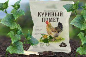 Технология подкормки огурцов куриным пометом и сроки внесения удобрений