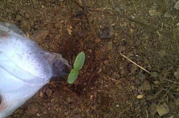 Полив под корень