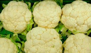 Как правильно посадить в открытый грунт цветную капусту, схемы и сроки процедуры