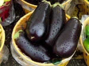 Описание и характеристики сорта баклажанов Вера, урожайность и выращивание