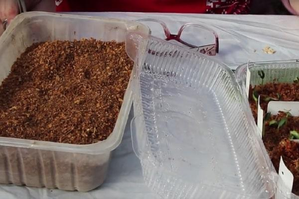 японский способ выращивания огурцов