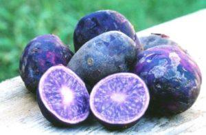 Описание и характеристика сортов фиолетовой или синей картошки, полезные свойства