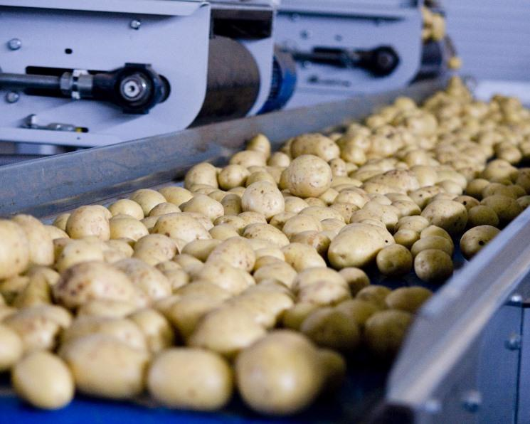 картофель анна